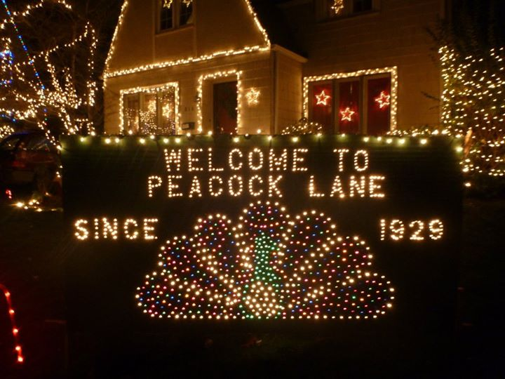 peacock lane portland christmas light limo tour