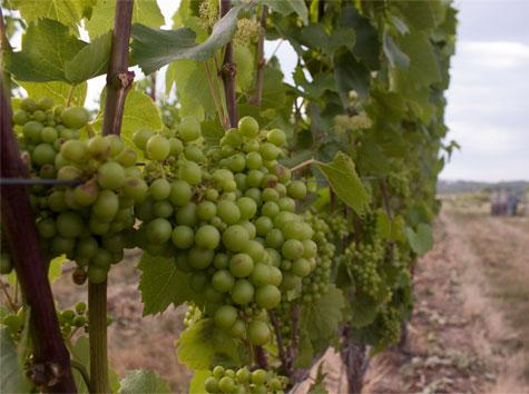 Oregon Wine Tours from JMI Limousine