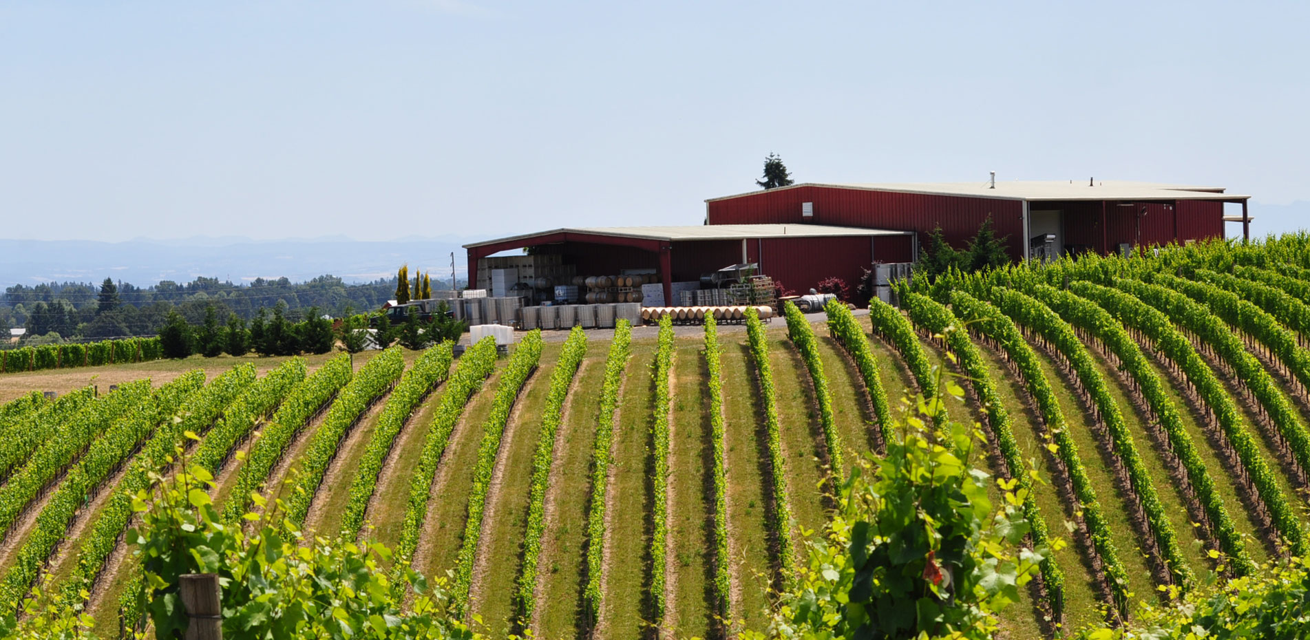 Exclusive Pinot Noir Wine Tour from JMI Limousine