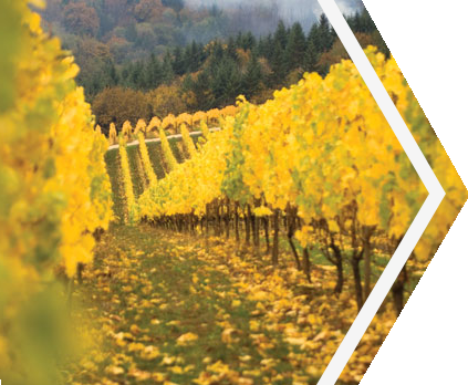 Ponzi Vineyards - Oregon Wine Country Founders Tour From JMI Limousine